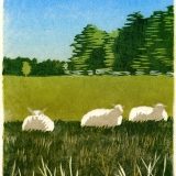 Summer sheep