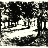 Trees, late afternoon