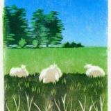Summer sheep 2